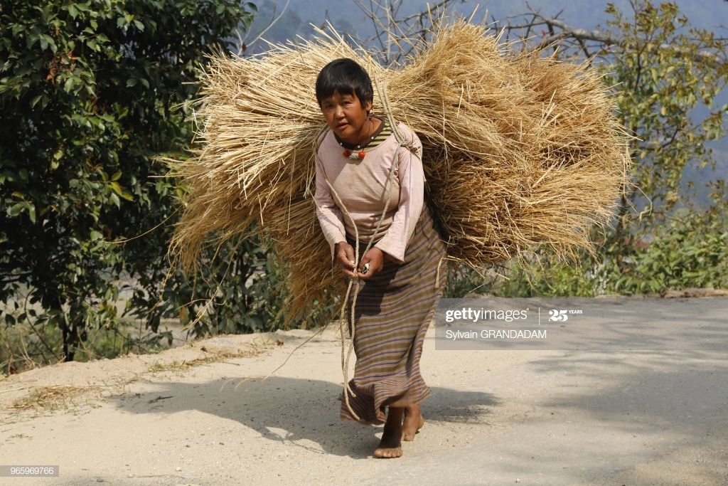 Bhutan (kingdom of), City of Punakha, peasant carrying rice straw for feeding cattle